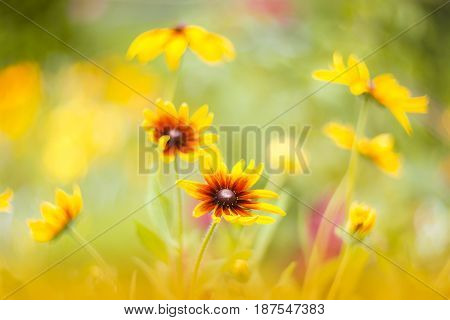 Yellow flowers on a beautiful background with soft focus