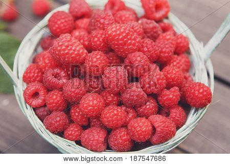 Raspberries harvest closeup in basket. Summer berry background, flare effect