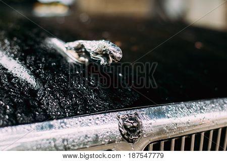 Tbilisi, Georgia - October 22, 2016: Wet After Rain Jaguar Logo Logotype Sign - Wild Cat Jaguar In Jump On Vintage Jaguar XJ X308 Sedan Car