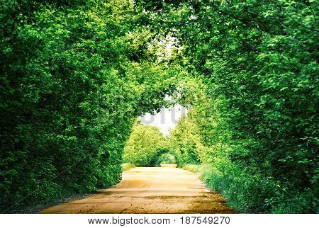 Road in a tunnel of green trees in the afternoon