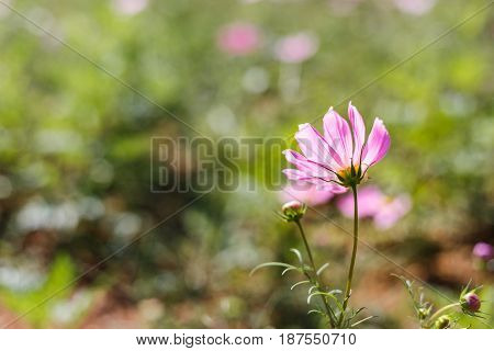 Fluorescent Pink Flower