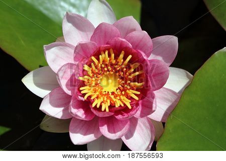 The beauty of the water lilies in its many different varieties and sizes