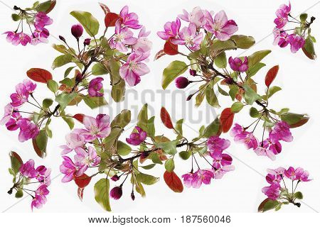 Cherry blossom spring backdrop - floral seamless pattern on a white background