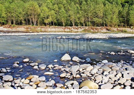 A mountain river with a rapid current and a forest in the summer.