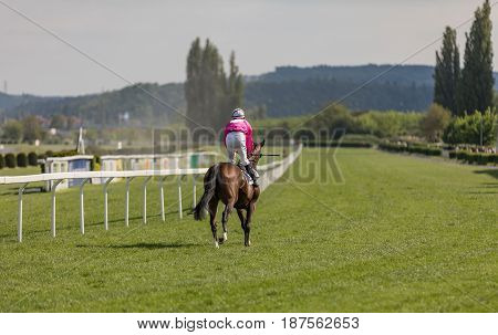 racing horse coming first to finish line in summer day rider on the racing circuit competition