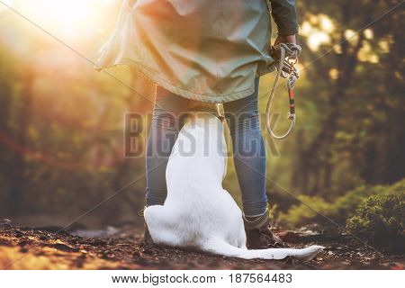 young cute labrador retriever dog puppy is teached in the dog school by a female dog trainer - sitting between legs