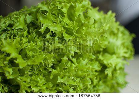 Bunch Of Raw Organic Green Frisee Salad Close Up.