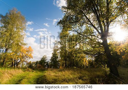 Colorful autumn landscape with sun shining through a tree