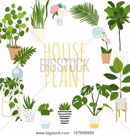 House plants. Flowerpot isolated objects houseplant flower pot collection.