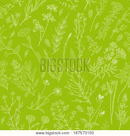 Herbs and wild flowers vector drawing vintage seamless pattern. Detailed botanical sketch medicinal and honey plants.