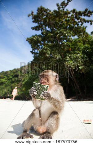 KO PHI PHI, THAILAND, February 1, 2014: Tourists feeding monkeys, top attraction of Phi Phi Islands, Monkey Bay (Ao Ling), Thailand