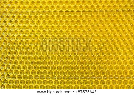 Bees have built new cell for honey. Honey comb background or texture