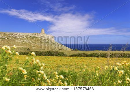The most beautiful landscape of Italy: Salento, Apulia. Springtime: field of wildflowers; in the background Sant''Emiliano tower located in The Otranto Santa Maria di Leuca Coast and Tricase Woods