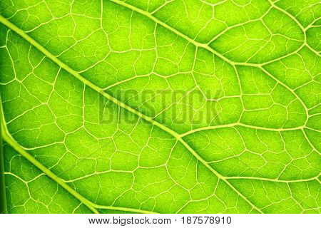 Green leaf background texture macro