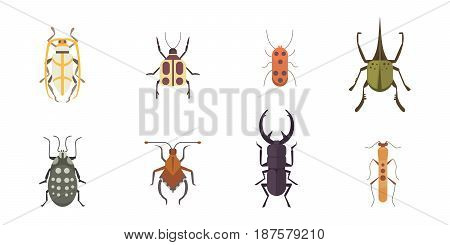 Set of insects flat style vector design icons. Collection of nature beetle and zoology cartoon illustration isolated