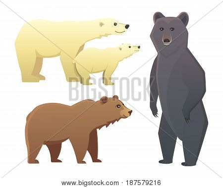 illustration with different bears isolated on white background
