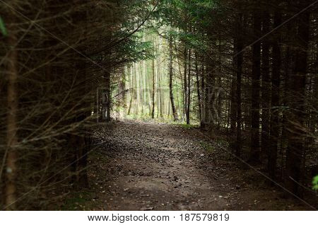 Hiking trail trough the dense forest with light in the end.