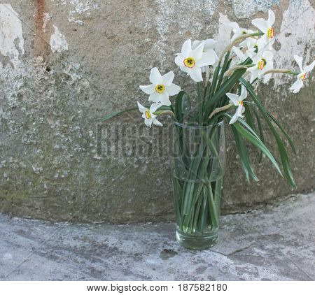 White daffodils in a glass on a background of gray concrete. Flower background. Flowers photo concept. Holidays photo concept. Copyspace