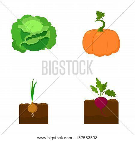 Cabbage, pumpkin, onion, buriak.Plant set collection icons in cartoon style vector symbol stock illustration .