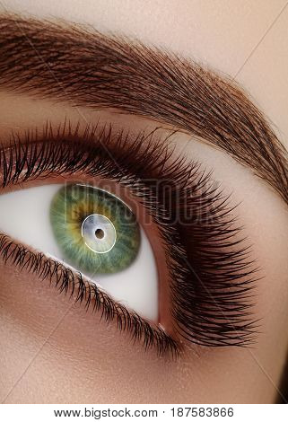 Close-up macro beautiful female eye with extreme long eyelashes perfect shapes of eyebrows. Lash design natural health lashes. Clean vision