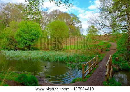 Wooden bridge at Ravine Pond in spring, Wimbledon Common, England, UK