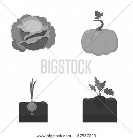 Cabbage, pumpkin, onion, buriak.Plant set collection icons in monochrome style vector symbol stock illustration .
