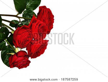Red roses bouquet isolate corner decor decoration