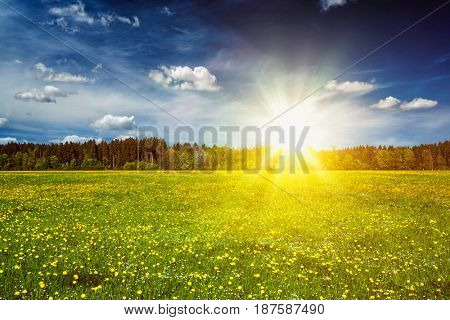 Summer meadow on sunset with blu sky and sun rays. With lens flare and light leak