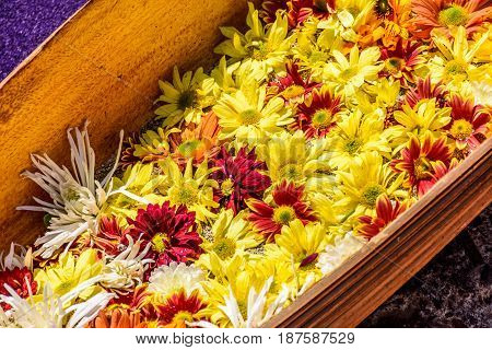 Closeup of daisies on Lent carpet for procession in Antigua, Guatemala; colonial town with most famous Holy Week celebrations in Latin America.