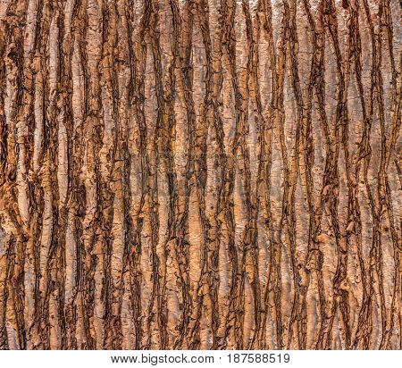 Close up of the bark of a palm tree. texture