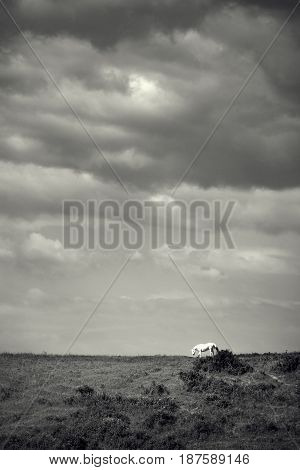 Horse on a green meadow dromatic sky