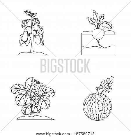 Radish, strawberry, watermelon, eggplant.Plant set collection icons in outline style vector symbol stock illustration .