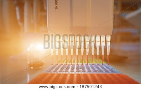 pcr process in microbiology laboratory