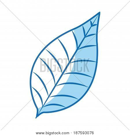 nature leave foliage botanical image vector illustration