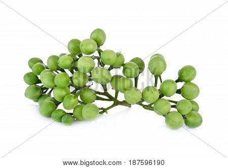 branch of pea eggplant or turkey berry on white background