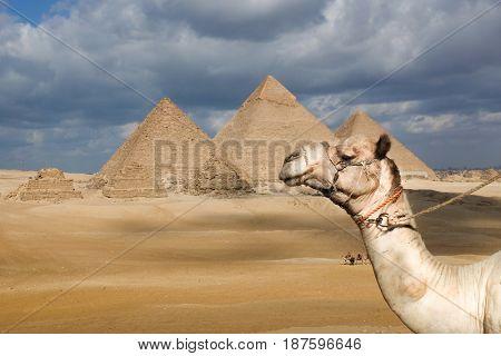 Giza Pyramids in Cairo - Egypt