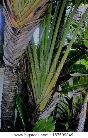 Honolulu,HI island native  plants in the valley.