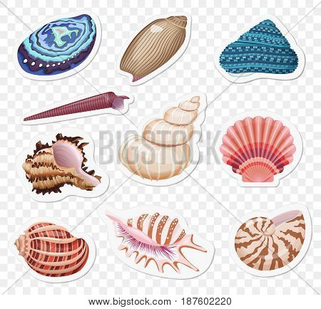 Vector sea shells stickers sset on the transperant alpha background