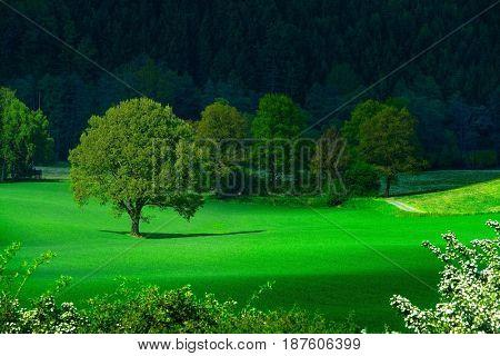Spring wooden-steppe landscape
