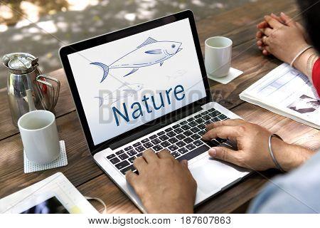 Nature Fish Ocean