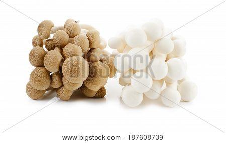 White-Brown beech mushrooms Shimeji mushroom Edible mushroom isolated on white background