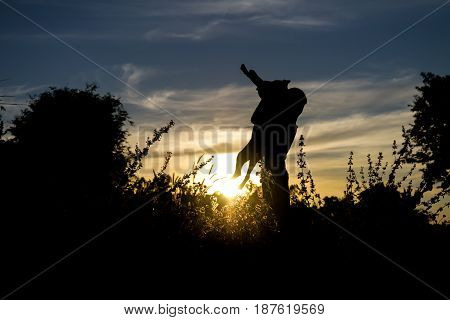 Children playing with dog silhouette outdoor background.