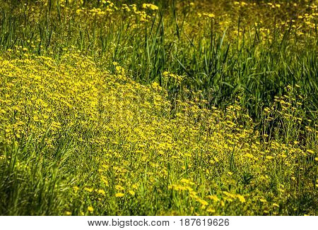 Sunny flower field. Flowers in Garden. Selective focus and sunlight effect. Flower field in spring time. Beautiful meadow background.