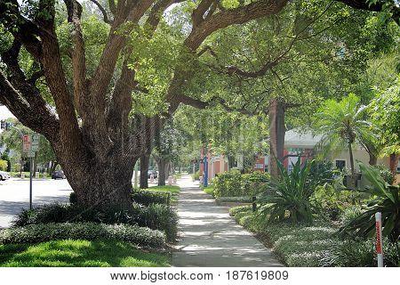 Beautiful old oak in quiet suburban street in Saint Petersburg, Florida poster