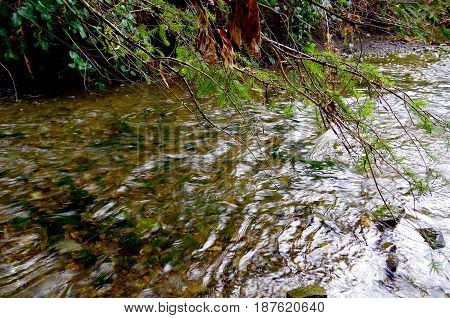 Tree branches overhang a swiftly moving stream near Mackenzie Bight Vancouver Island BC.