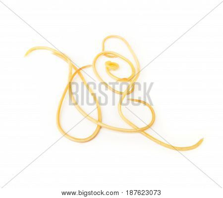 Helminthiasis Toxocara canis (also known as dog roundworm) or parasitic worms from little dog on white background selective focus