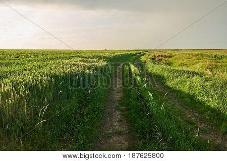 Rural Road Through Wheat Field