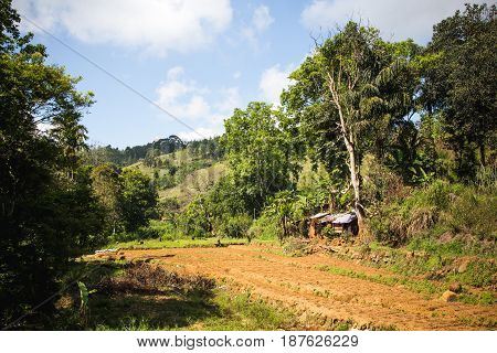 Traditional Shack And Field In The Rural Mountain Region Around Ella And Nuwara Eliya, Sri Lanka.