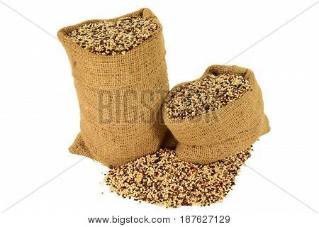 Popular as Tri color (Tri-Color Tricolor) Organic Quinoa seeds (white Black Red Quinoa seeds) in burlap bags and spilled out on pile isolated over white background
