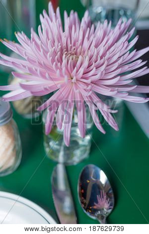purple chrysanthemum on a table with silverware